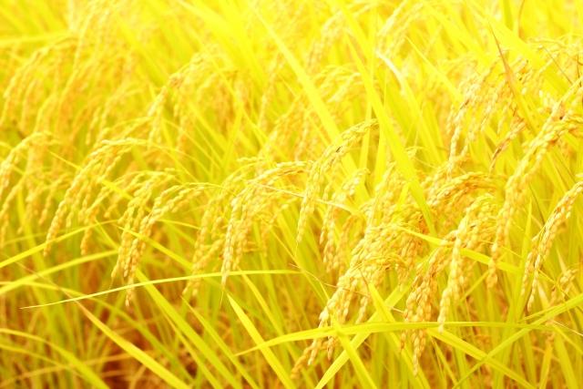 金芽米と玄米の違いって?味はおいしいの?